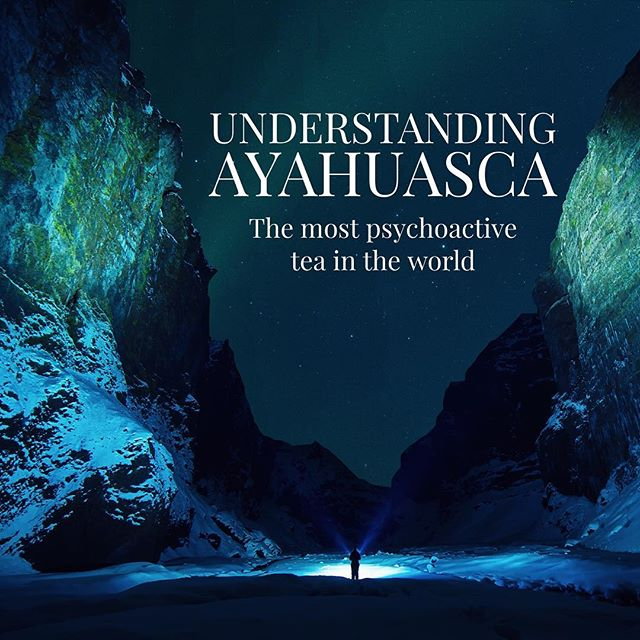 Understanding ayahuasca article is up. Check the link im my bio. #ayahuasca #banisteriopsiscaapi #psychotria #staywoke #amazonrainforest