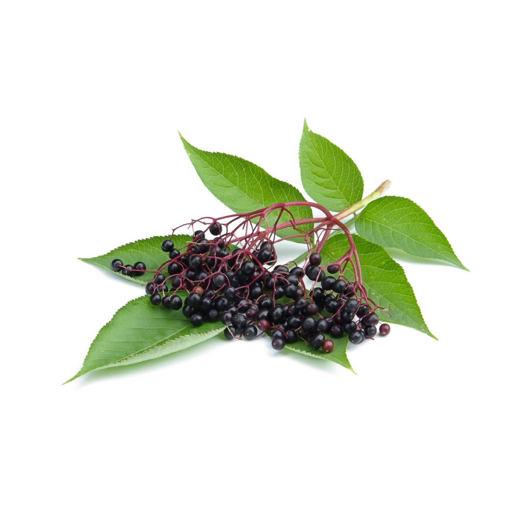 Elder leaves and berries