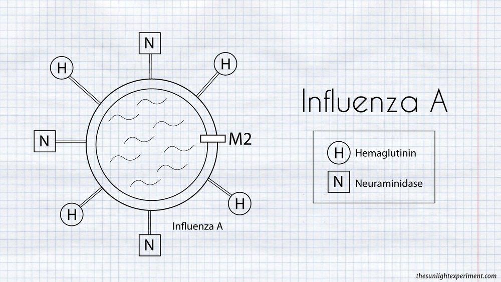 influenza-A-diagram.jpg