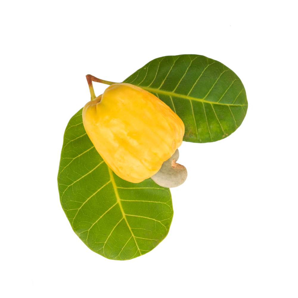 cashew-plant.jpg