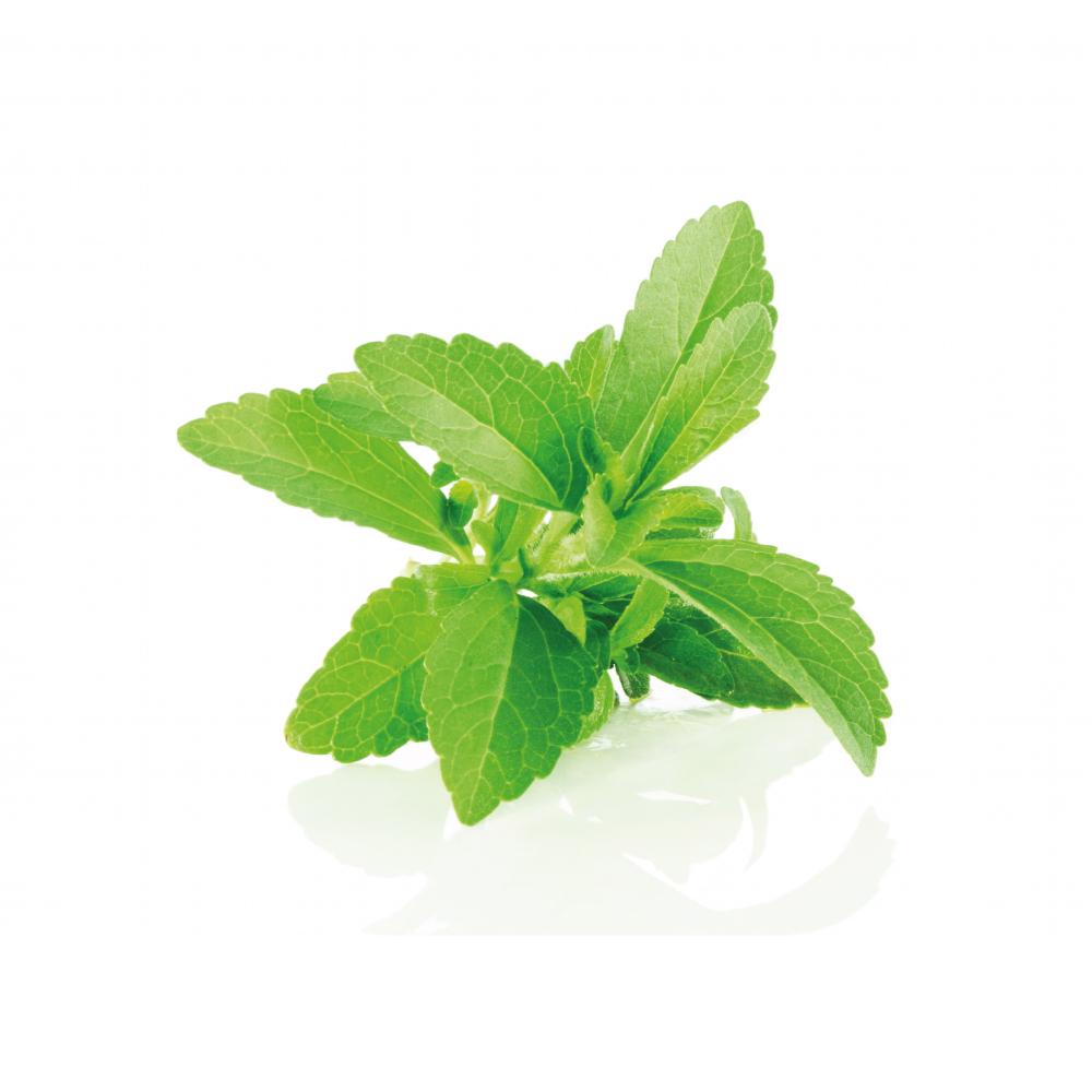stevia-cover.jpg