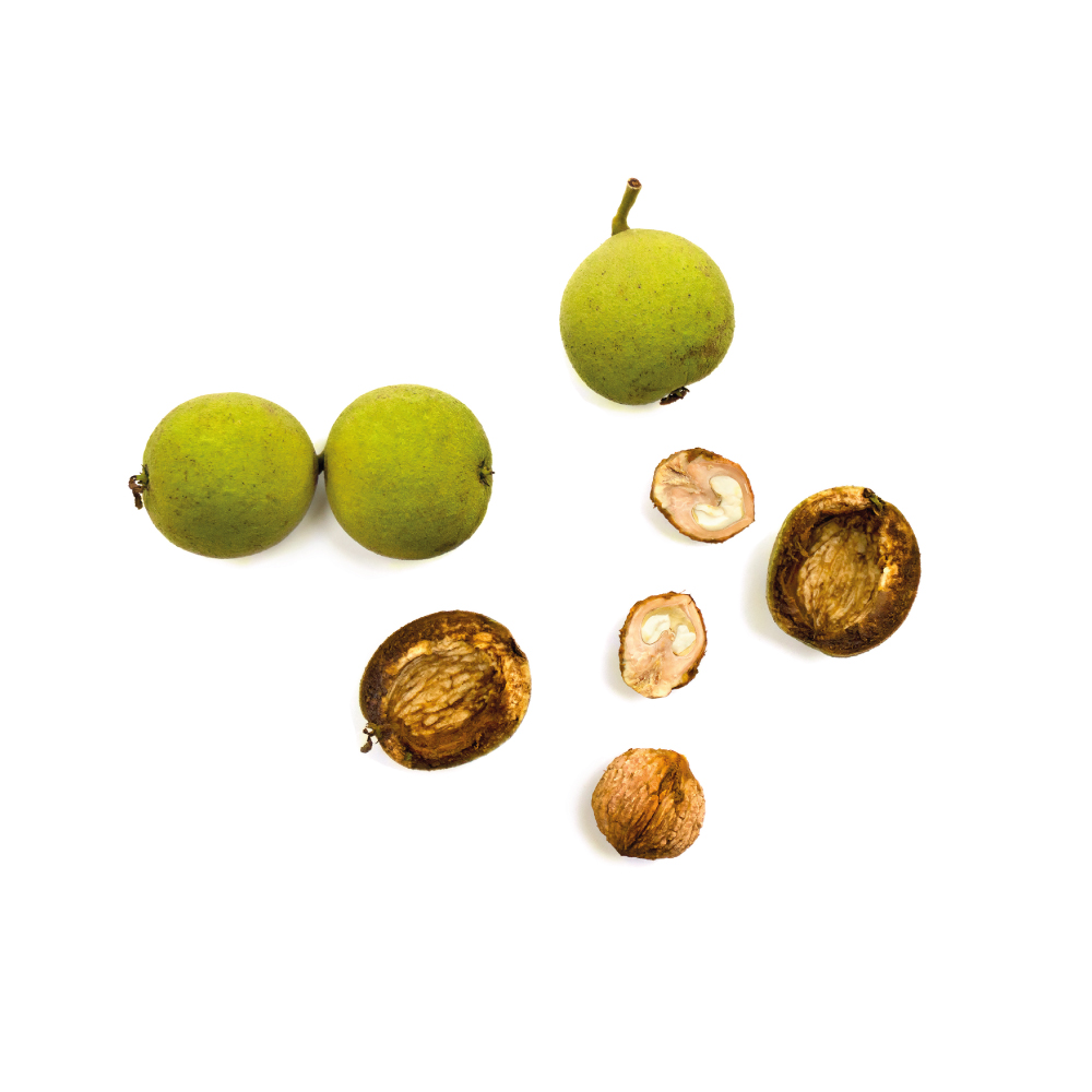 black-walnut-cover.jpg