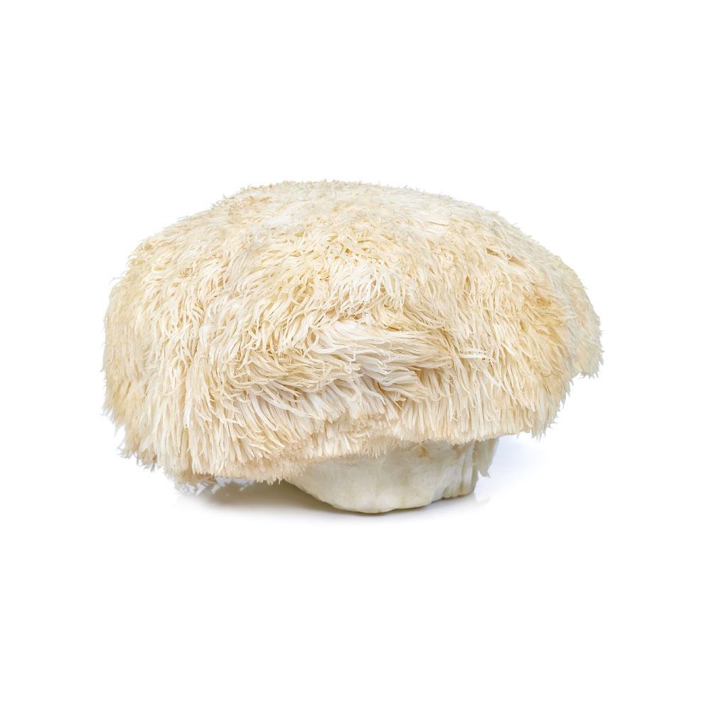 lions-mane-mushroom.jpg