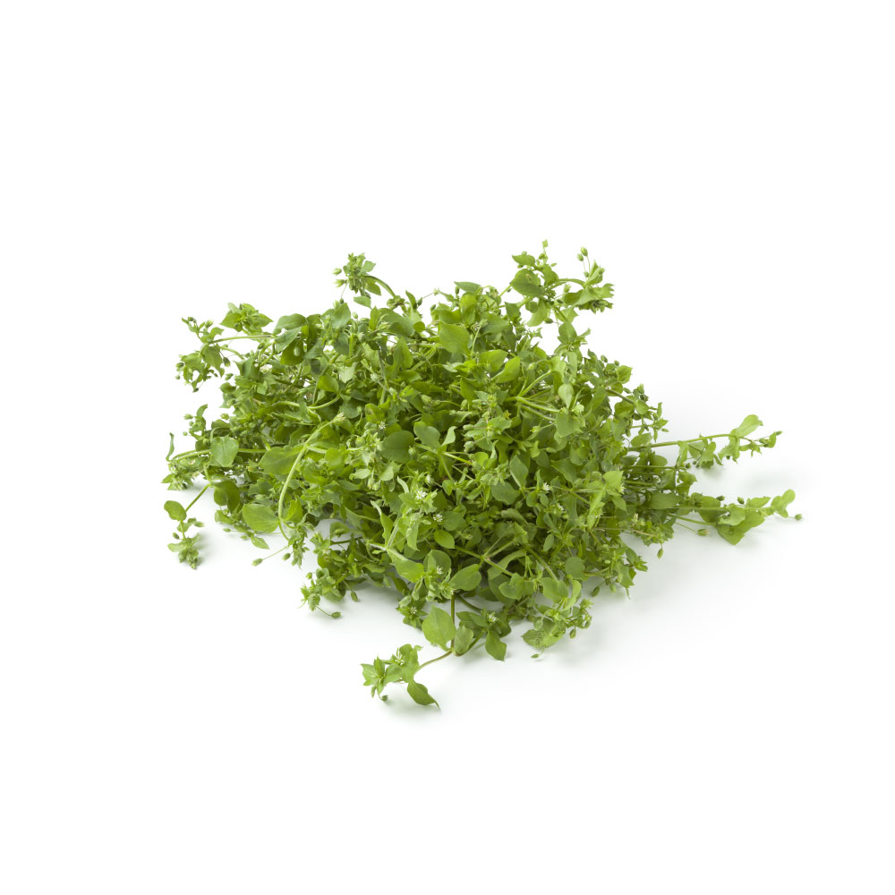 Chickweed-cover.jpg