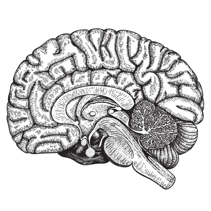 brain-drawing.jpg