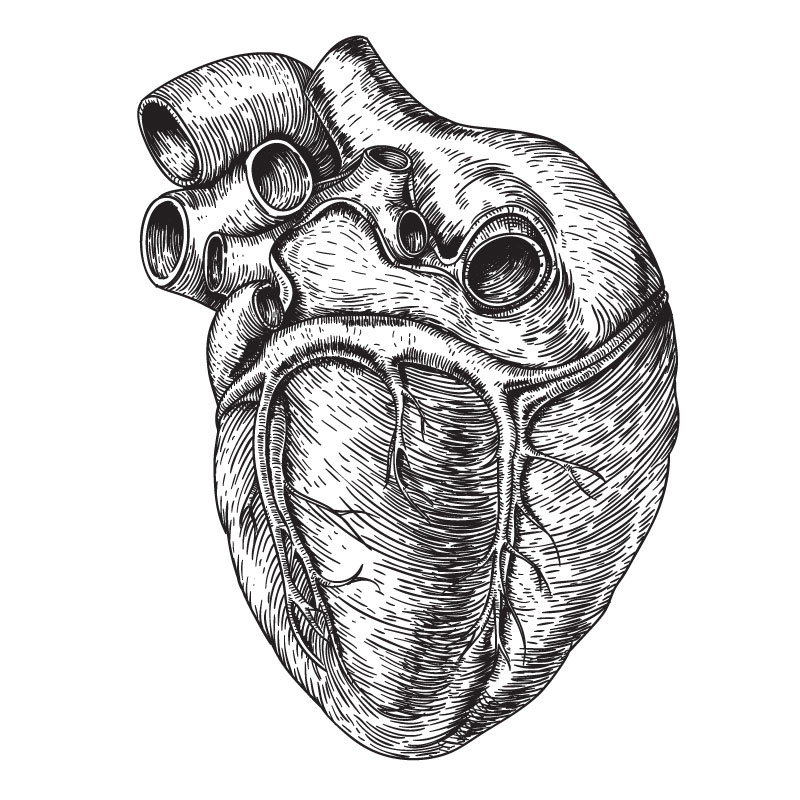 heart-drawing.jpg