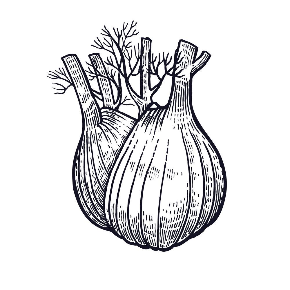 fennel-drawing.jpg