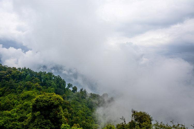 The+Amazon+rainforest+habitat.jpeg