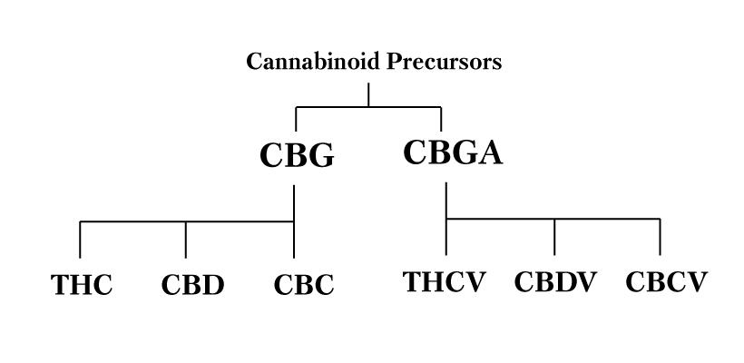 tse-cannabinoid-family.jpg