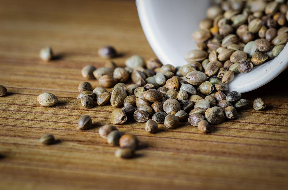 cannabis-seeds.jpg