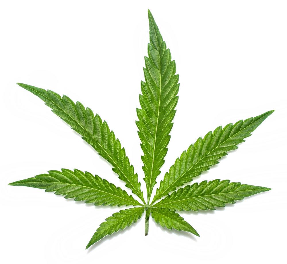 hemp-leaves.jpg