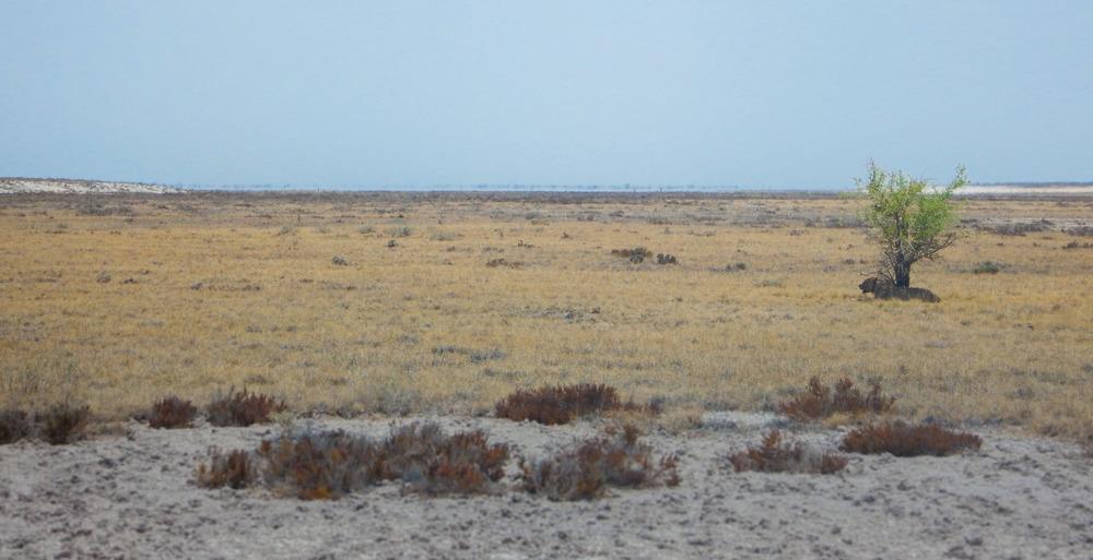 I saw this in Etosha National Park, Namibia. 10th of November 2015, 13:08.
