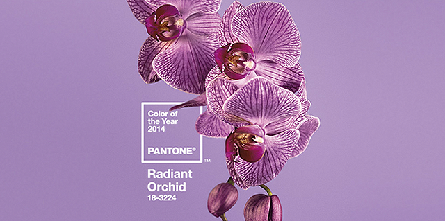 Color of the year 2014 - Radiant Orchid 18-3224.png