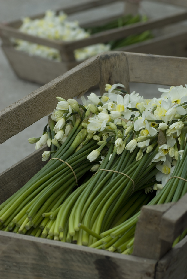 What S In Season The British Flower Collective