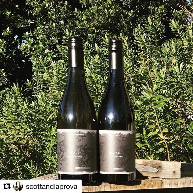 #Repost @scottandlaprova ・・・ New releases: Scott 'Piccadilly Valley' Chardonnay 2016, and Scott 'Hope Forest' Syrah 2015. @samscottwines  Both will be on the tasting flight this weekend.  Cellar door open 2 & 3 Sept, 11am-5pm. #hahndorf #scottandlaprova #ahwineregion