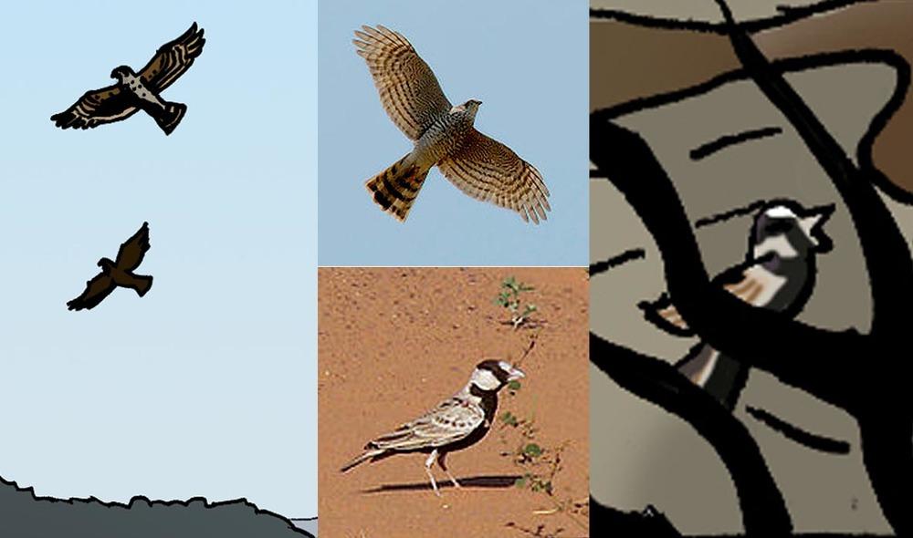bird and ref.jpg