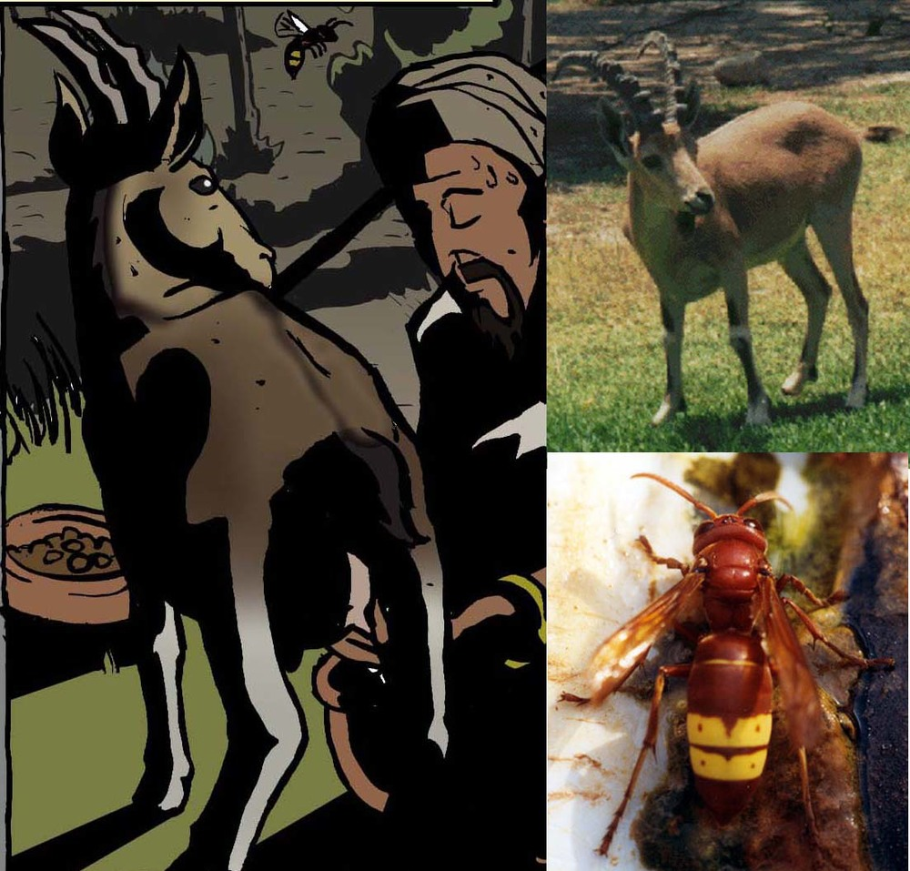 Animals Goat and Hornet.jpg