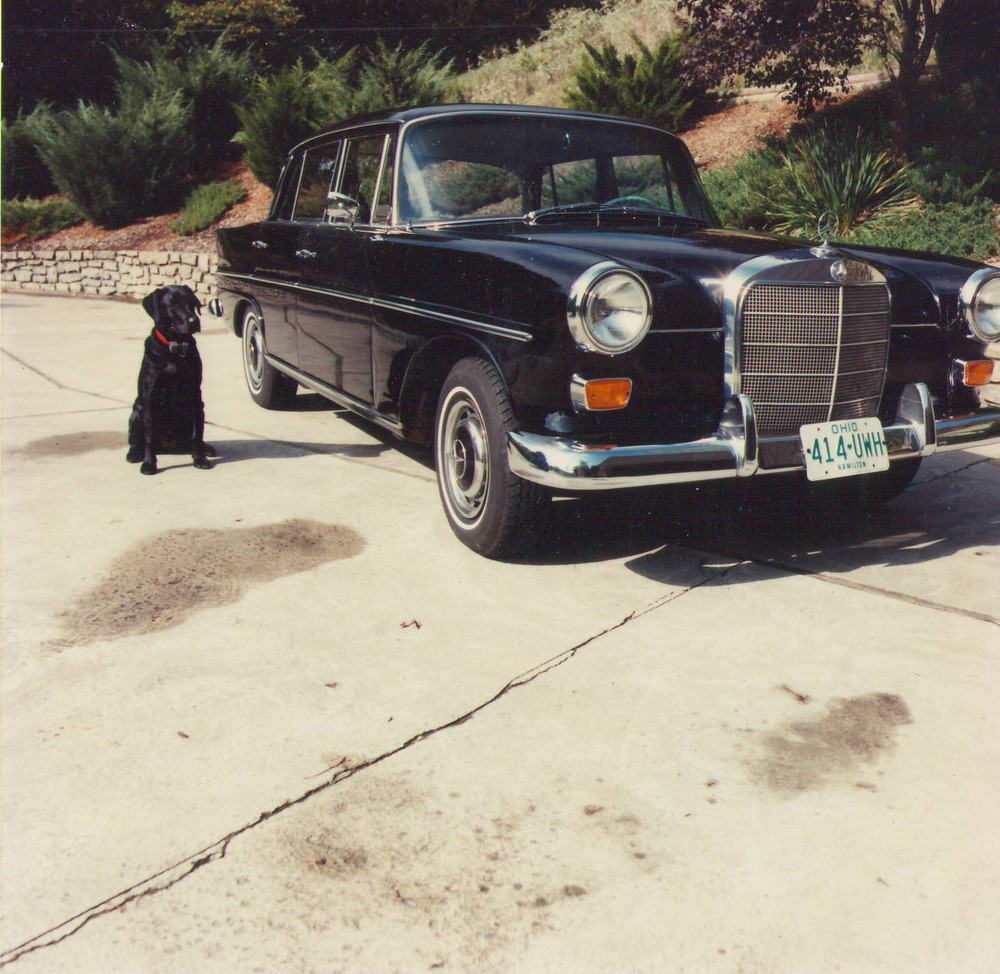 Black dog and car.jpg