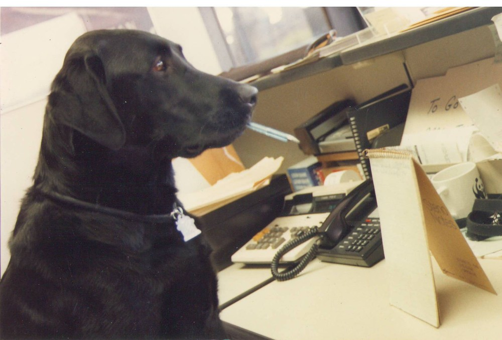 Dog at desk.jpg