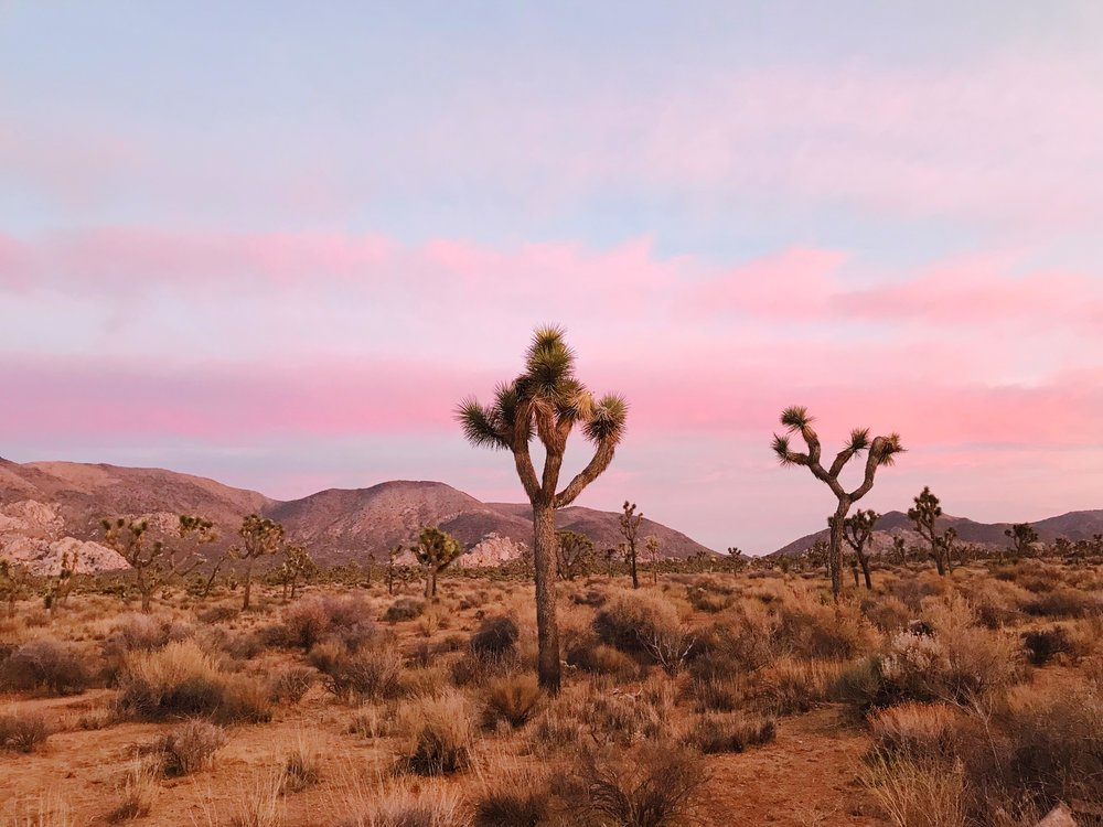 joshua-tree-sunset-photos.JPG