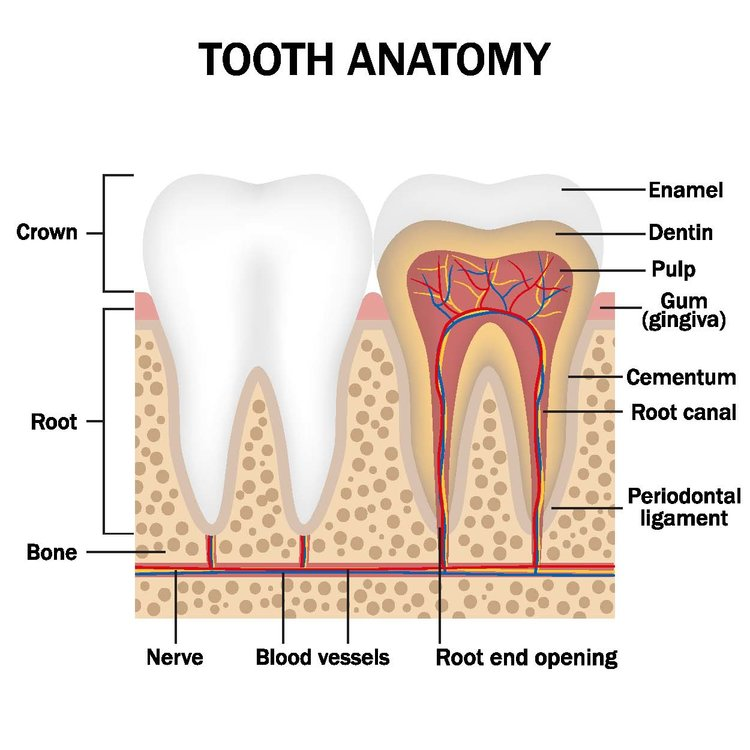 The Bad Side Of Root Canals: Making An Informed Decision — Celery ...