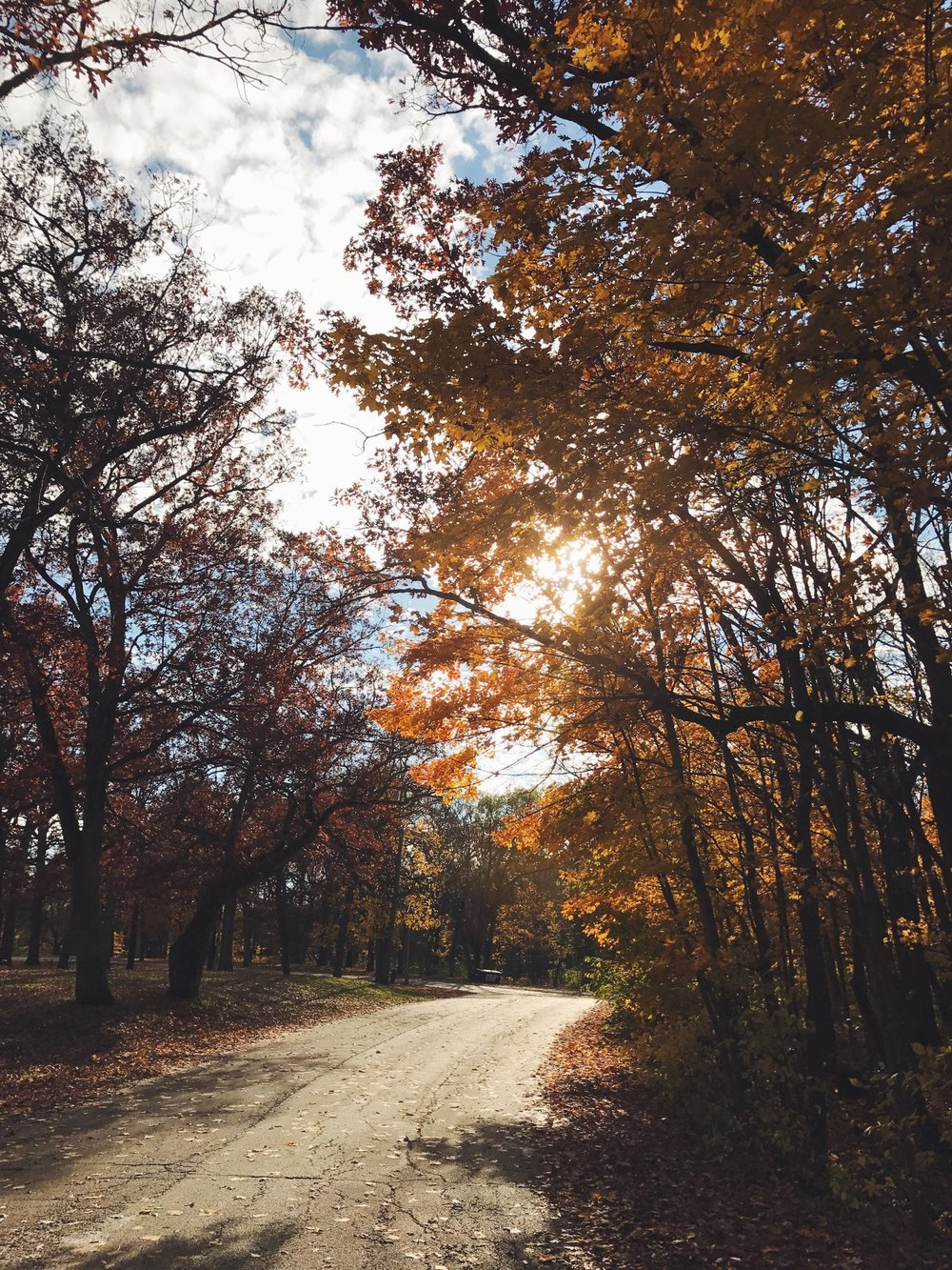 fall-trees-pathway-golden-light.jpg