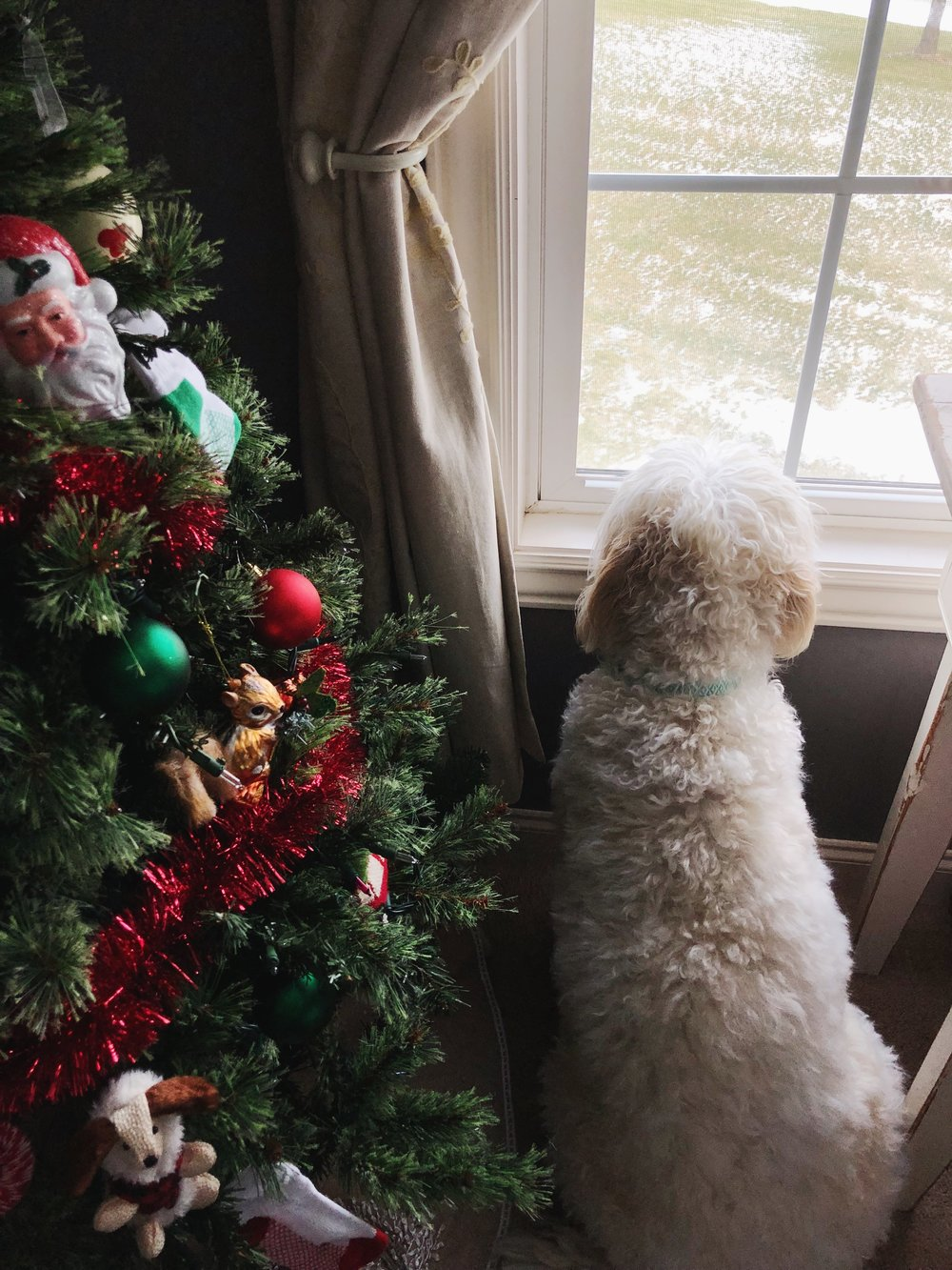 dog-christmas-tree.jpg