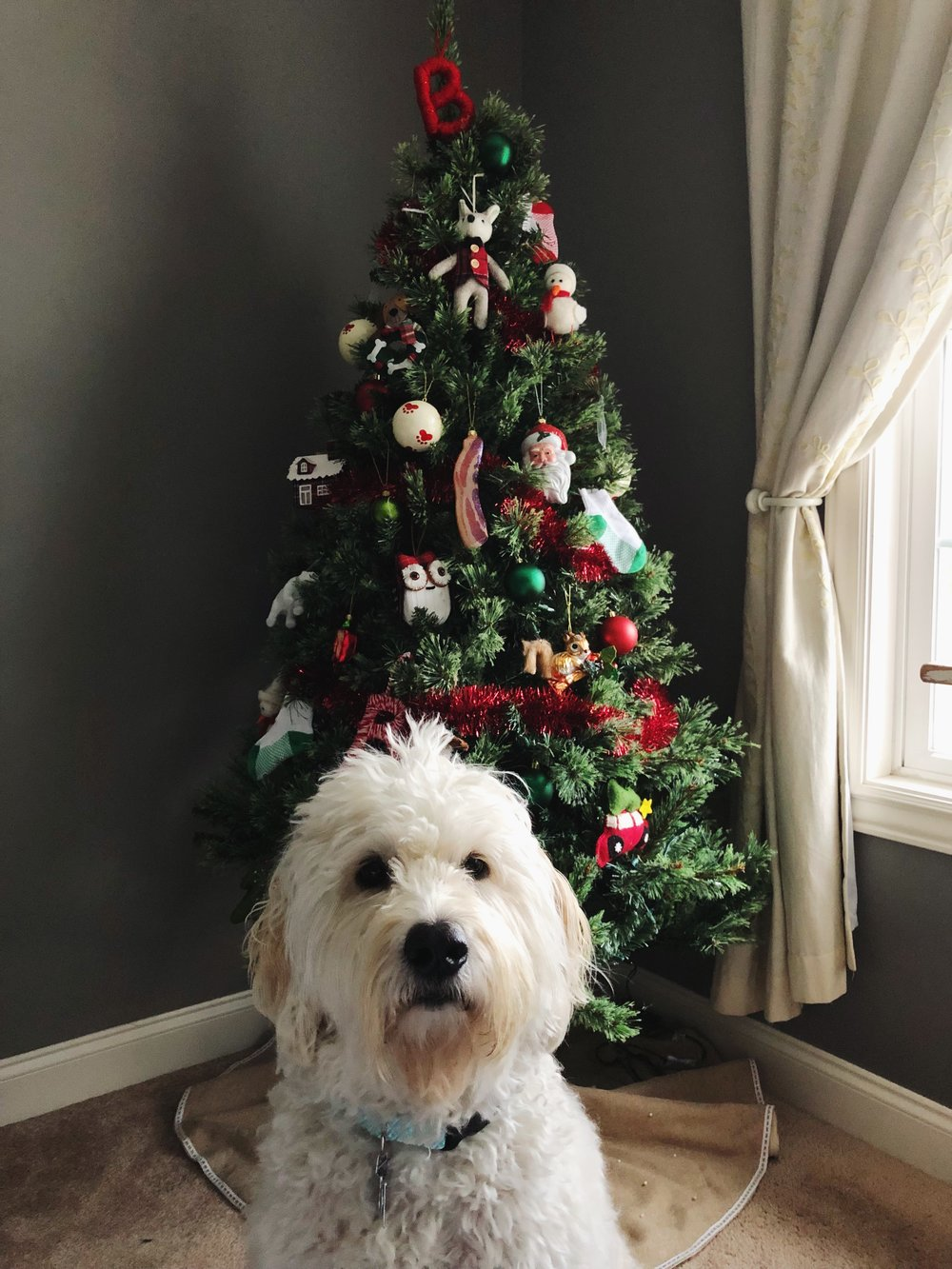 christmas-tree-for-pets.jpg