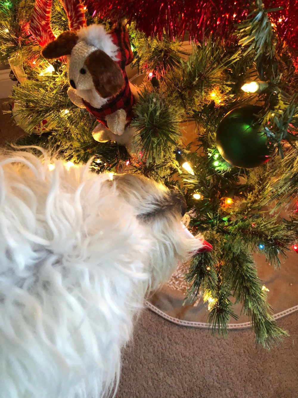 christmas-ornaments-for-dogs.jpg