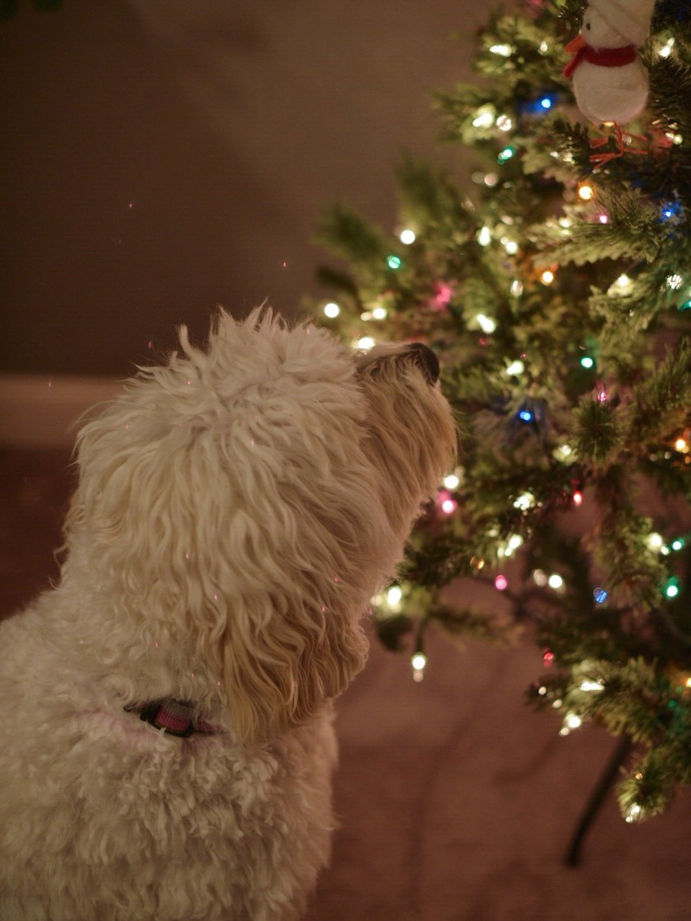 christmas-trees-for-dogs.jpg