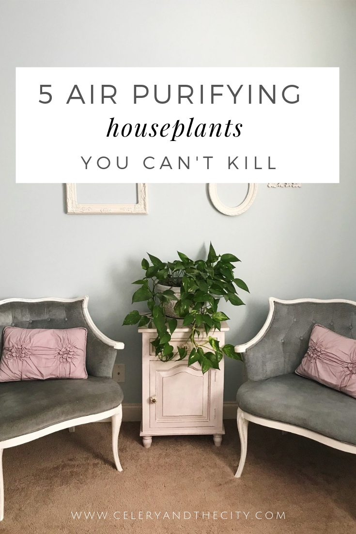 air-purifying-houseplants-you-cant-kill.jpg