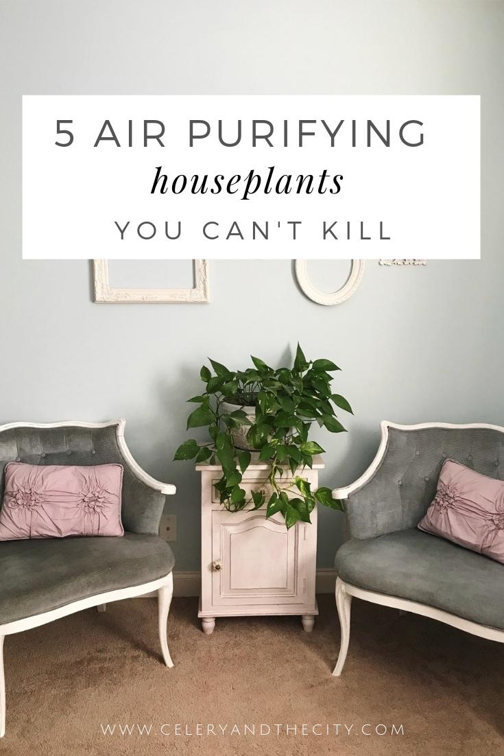 air-purifying-houseplants-you-cant-kill.jpg