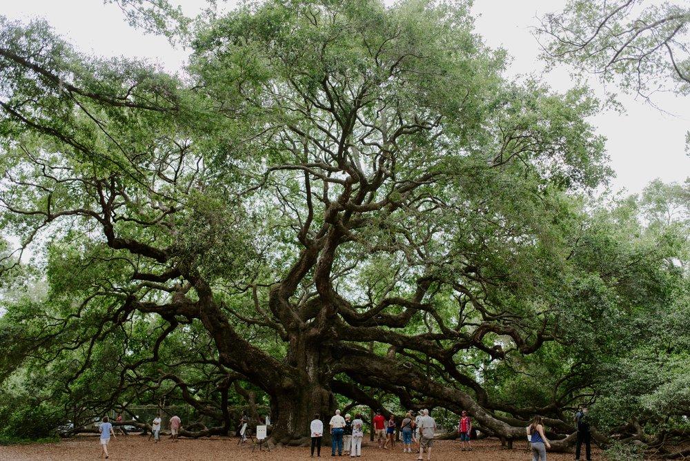 charleston-sc-city-guide-what-to-do-angel-oak-tree.jpg