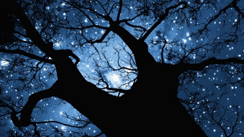 Tree and Stars. Image from gpshome.org