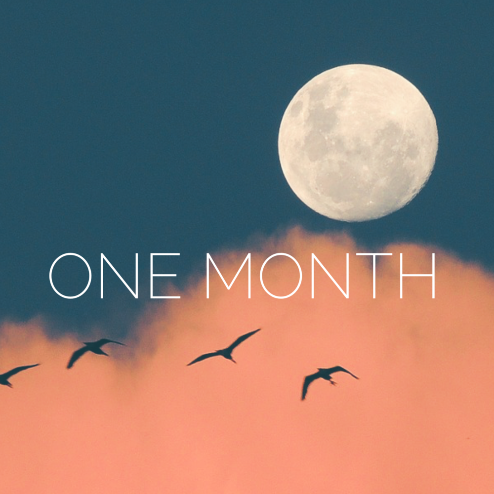 One-Month Introduction - A one time charge of $11 gives you access to the current monthly forecast as outlined above for a full month. Use the button below to pay and then click