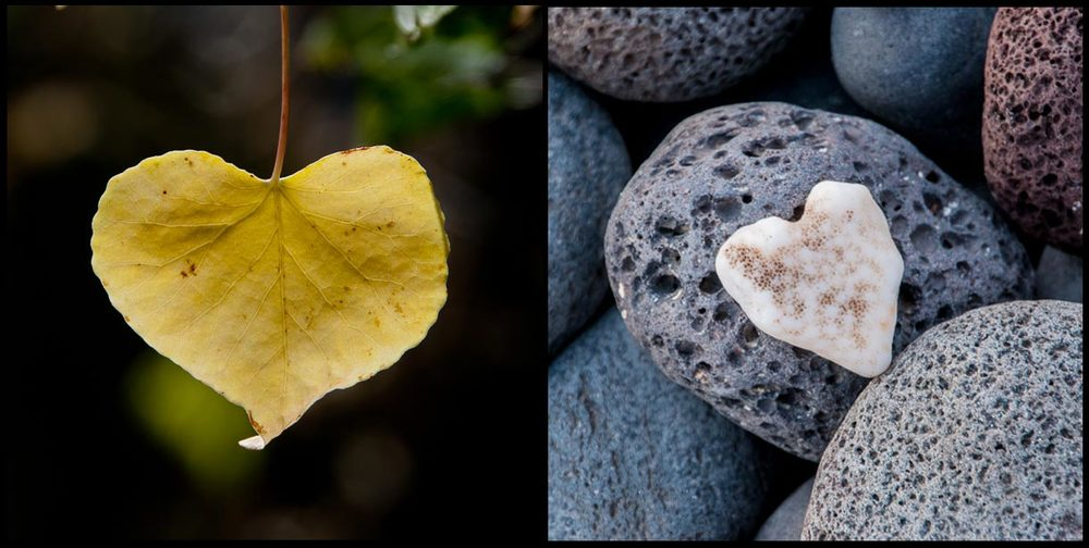 One day while taking a walk, I noticed a leaf shaped like a heart.  Having my camera, I took a picture of it and I called it Nature's Heart.  Now whenever I find a a heart in nature I add it to my collection.