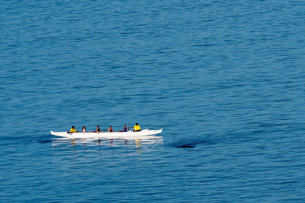 Outrigger canoe whale watch-Yes that dark area right in front of the boat is a whale that had breeched a few moments earlier.