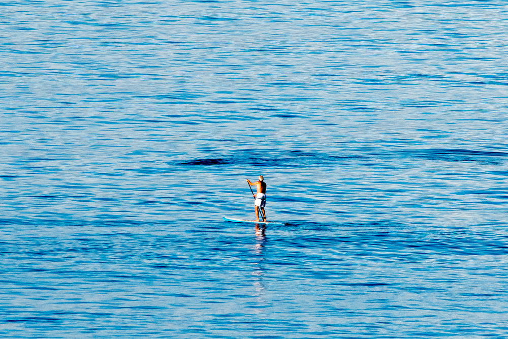 PaddleBoard Whale Watcher-Yes the dark area in the water is a massive Humpback Whale!