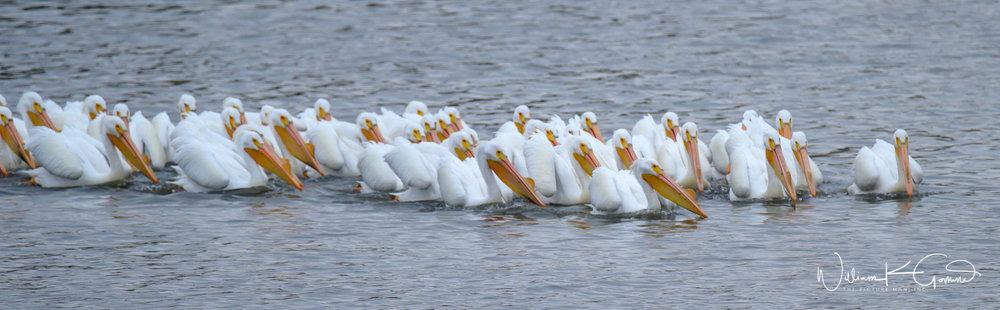 The large group slowly paddled around the lake.