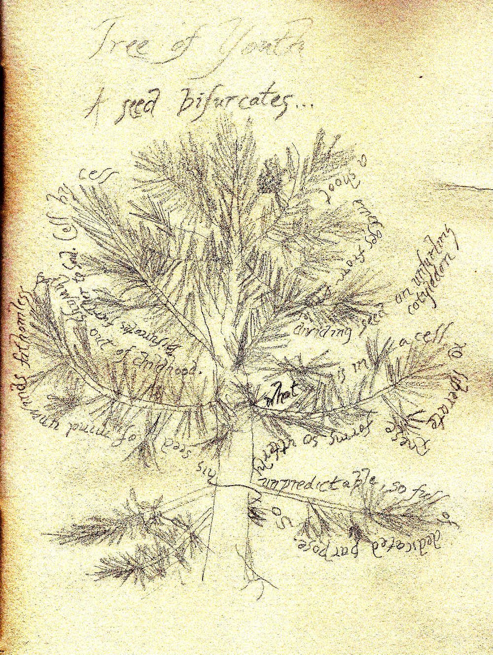 A page from 'A Book of Trees, Rocks, and Horizons'