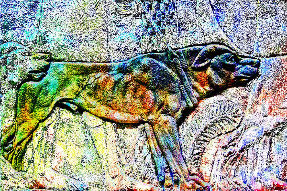Areyan dogs, 2