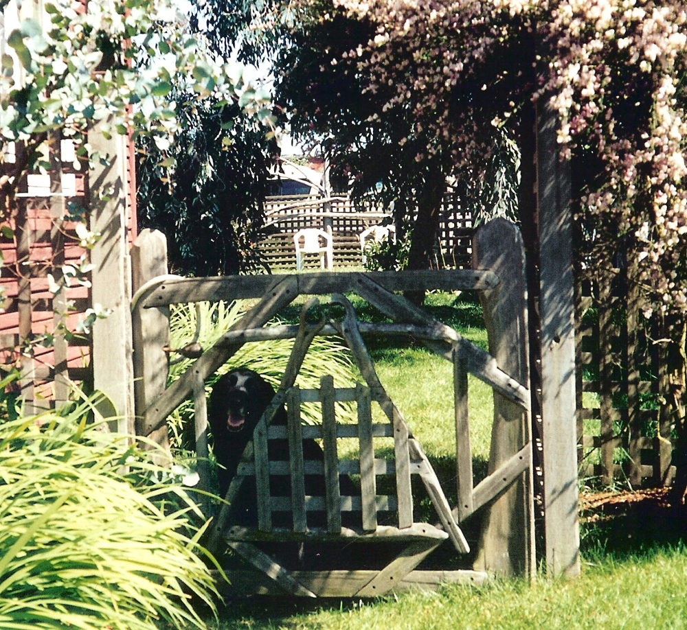 Driftwood constructions, side gate, summer