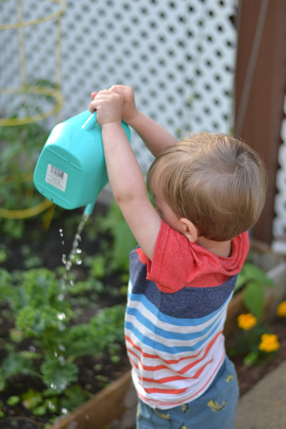 Sometimes watering feels like a chore, but sometimes it feels like a wonderful opportunity to watch Theo being Theo. It's also a great time to appreciate our garden and feel the happiness that is harvesting kale and eating freshly picked tomatoes.