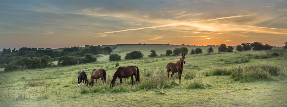 Horses and Figsbury Rings