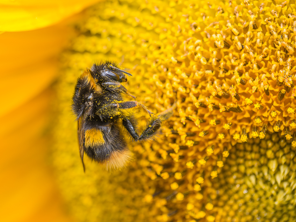 Bee and Pollen by Mark Cooper