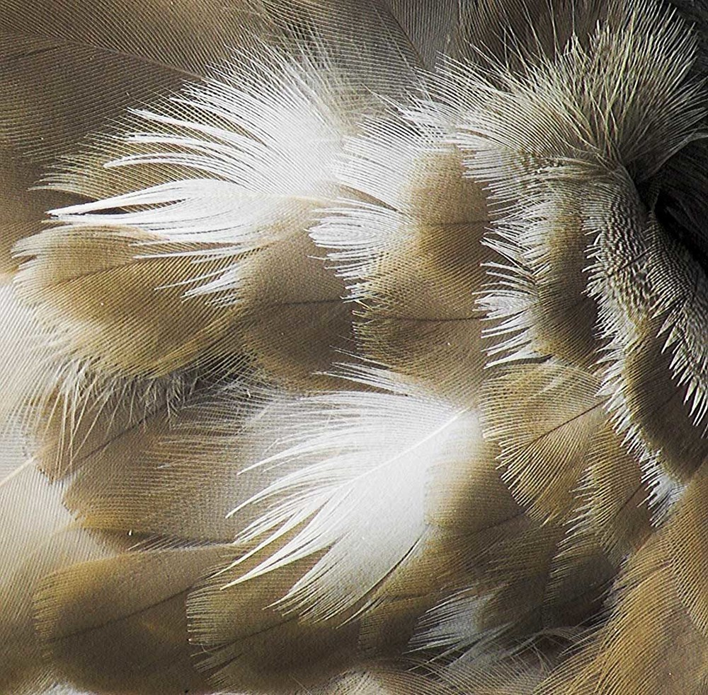 Duck Feather Close Up by Sheila Read