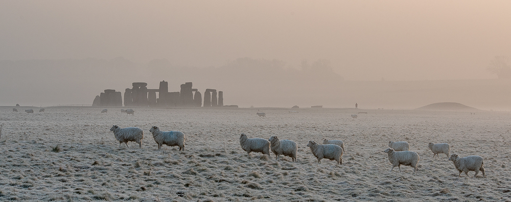 Second 'Sheep and Stones' by Mark Cooper
