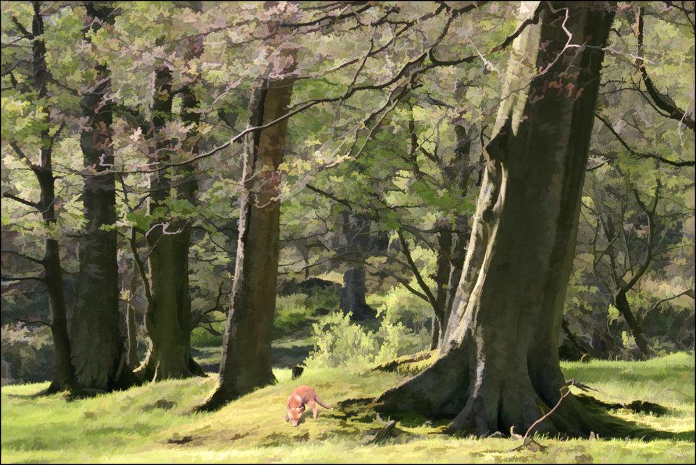 'Fox in Forest' by Shiela Read