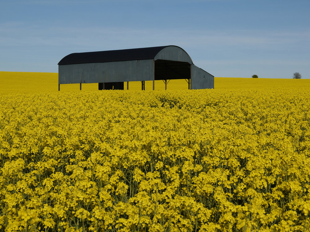 'Fields of Gold' by Graham Chubb
