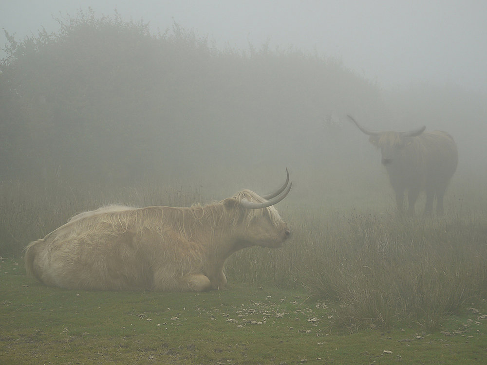 'Exmoorin the Mist' by Graham Chubb